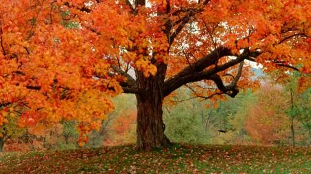 autumn-trees_112327-1920x1080.jpg